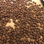 不良豆の手選別