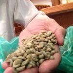 焙煎前のコーヒー豆、どうやって美味しさを見分けるの?