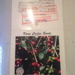 僕が見たコーヒー農園からのハワイの風景 vol.1