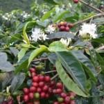 お正月におすすめコーヒーと福袋のご案内